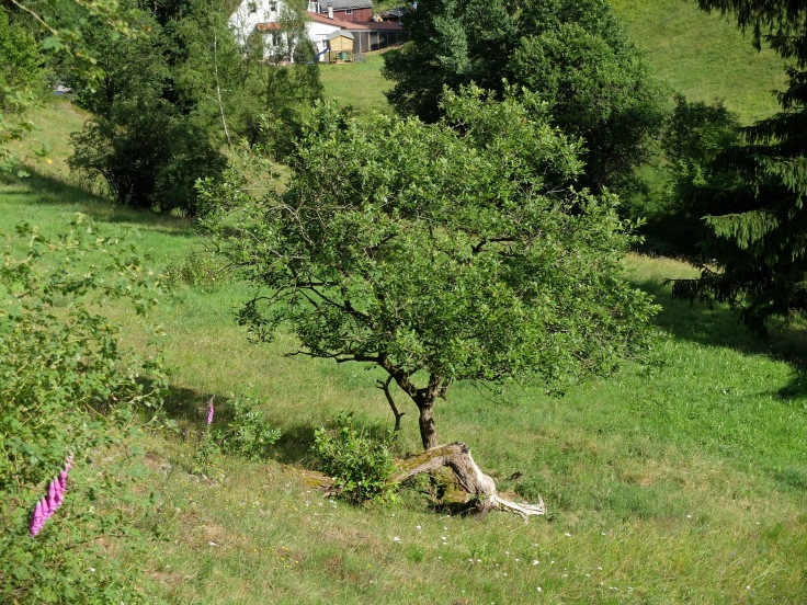 Mönchshof-Ilmenau - 15 von 20