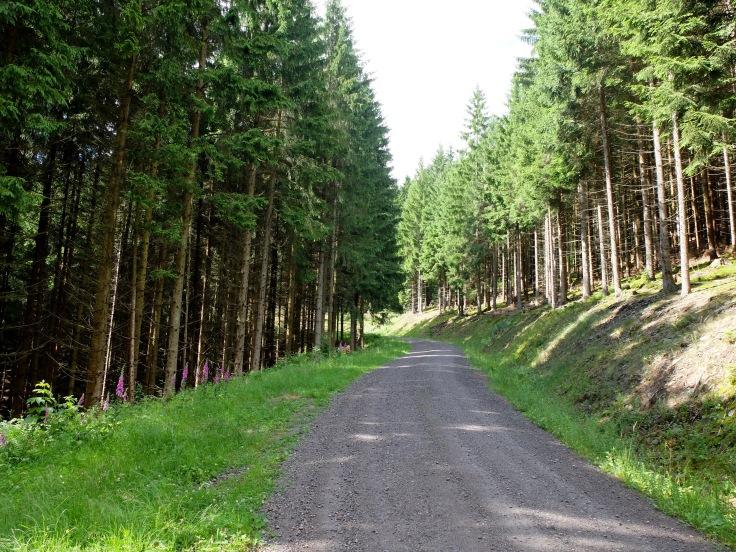 Mönchshof-Ilmenau - 6 von 20